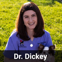 Dr. Dickey
