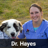 Dr. Hayes
