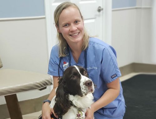 Why I wanted to be a vet (Ellen Neal, DVM)